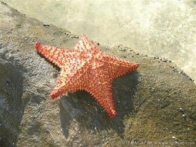 star fish 7 Binatang paling lambat di dunia