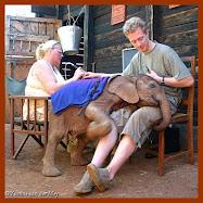 Electro-Acupunctuur onderzoek bij een baby olifant