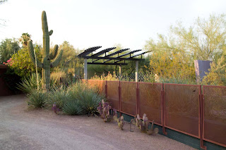 fragile Sonoran desert landscape