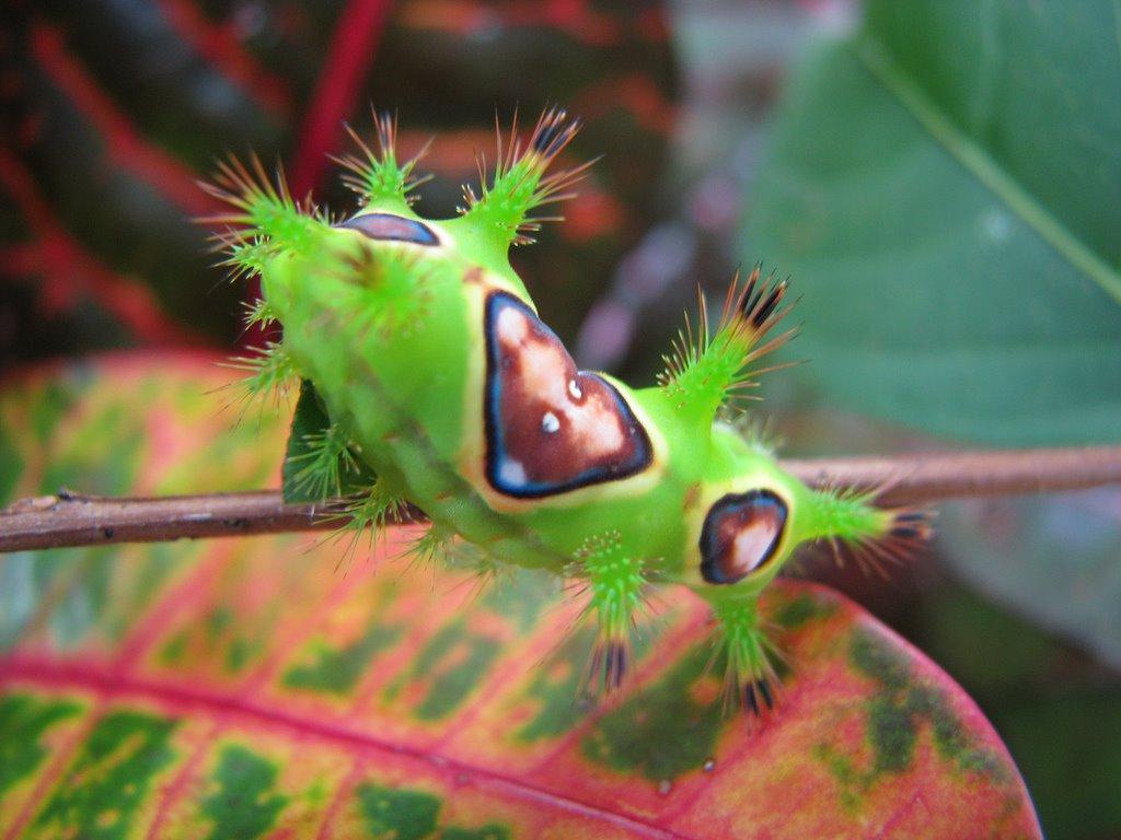 [Luminous_Green_Caterpillar_2.jpg]
