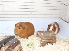Onze cavia's,Yumi en Michi