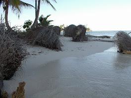 Les palmiers au sol par dizaines...