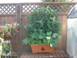 The Garden Patch Grow Box Giveaway My Humble Kitchen