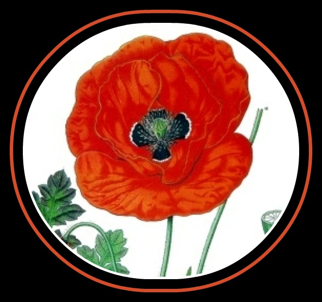 The Poppy - Papaver Rhoeas