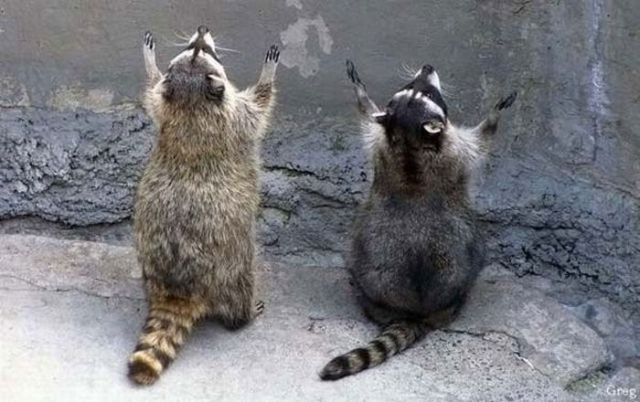 http://1.bp.blogspot.com/_YyXZ9LFygq0/TAdJpXz6NDI/AAAAAAAAALY/iuCQFIm-k0I/s1600/these_funny_animals_425_640_03.jpg