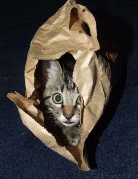 http://1.bp.blogspot.com/_YyXZ9LFygq0/TAdJpljt3gI/AAAAAAAAALg/TLugCgy_O3A/s1600/these_funny_animals_425_640_05.jpg