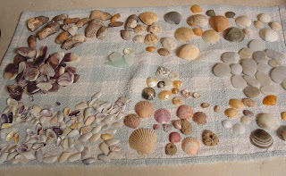 sea shells from Topsail Island, NC