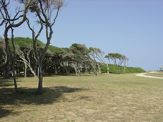 live oak grove at fort fisher, nc