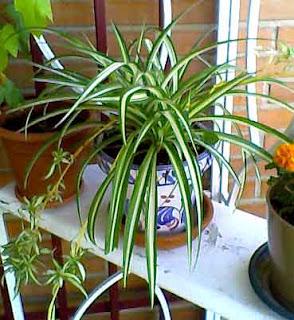 Cartas a mi madre la planta del d a ii cinta - Cinta planta ...