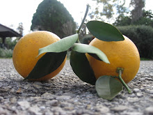 Stop & Smell The Oranges