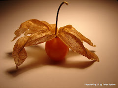 Simplesmente Physalis
