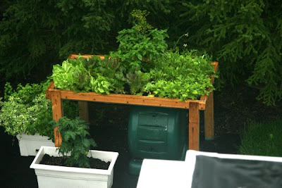 Lettuce and greens table