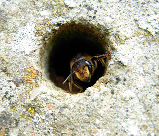 BEE SHELTERING IN HOLE