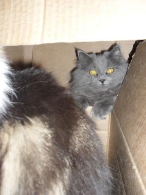 Nakenbilder av sam och katt