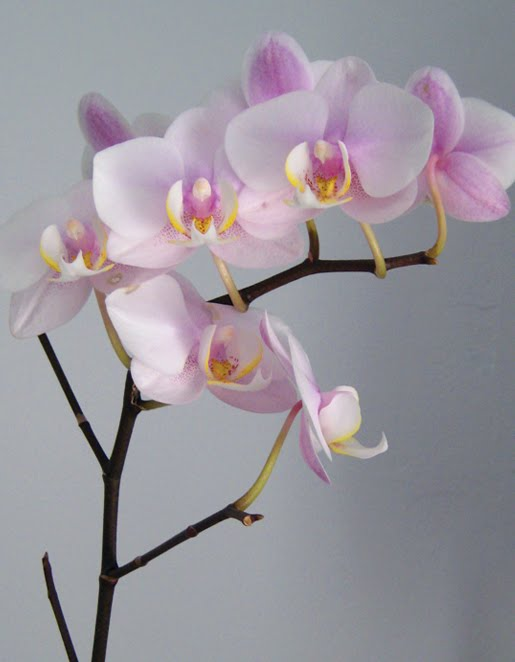 My Orchids at home