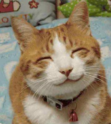 [Obrazek: smiling-cat.jpg]