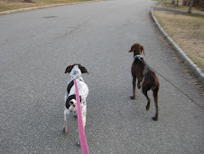 My new Walking Partner