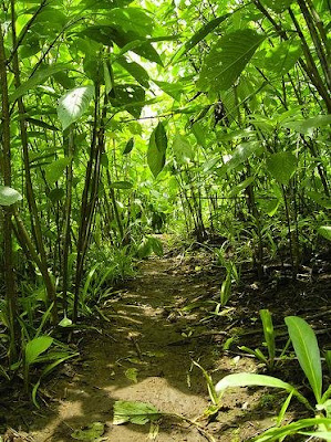 Bimashankar trek route