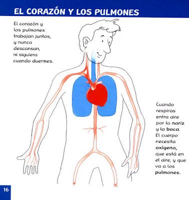 Anatomia Humana - Semperview