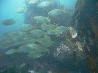 Diving Report – Summer 2010