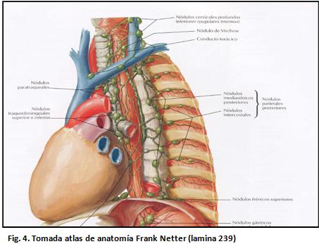 digestivouq: Drenaje linfático del cuello por Nathaly Aldana