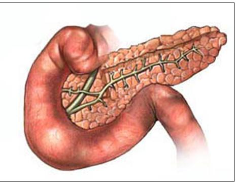 digestivouq: DUODENO POR JUAN E. BEDOYA
