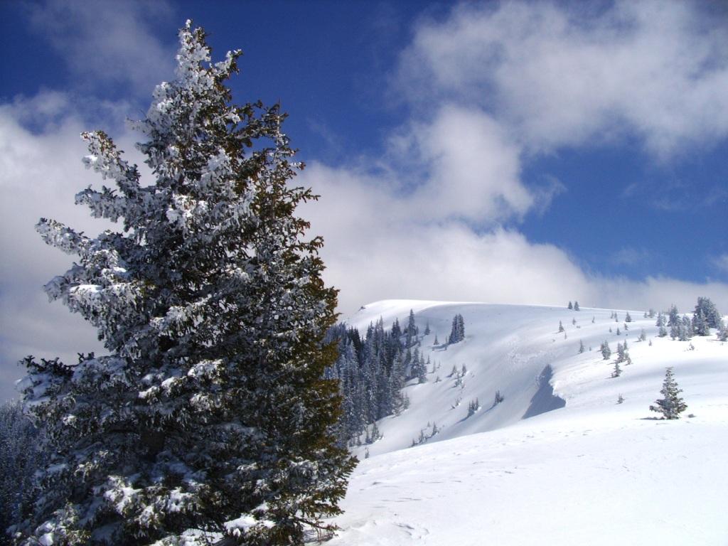 http://1.bp.blogspot.com/_ZDyZvuoFOGo/TRG_9mDS0VI/AAAAAAAAAFA/Azs3m6ZekvQ/s1600/Barnes_snow_ElkMtn1.jpg