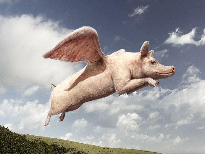 [Swine+flew.jpg]
