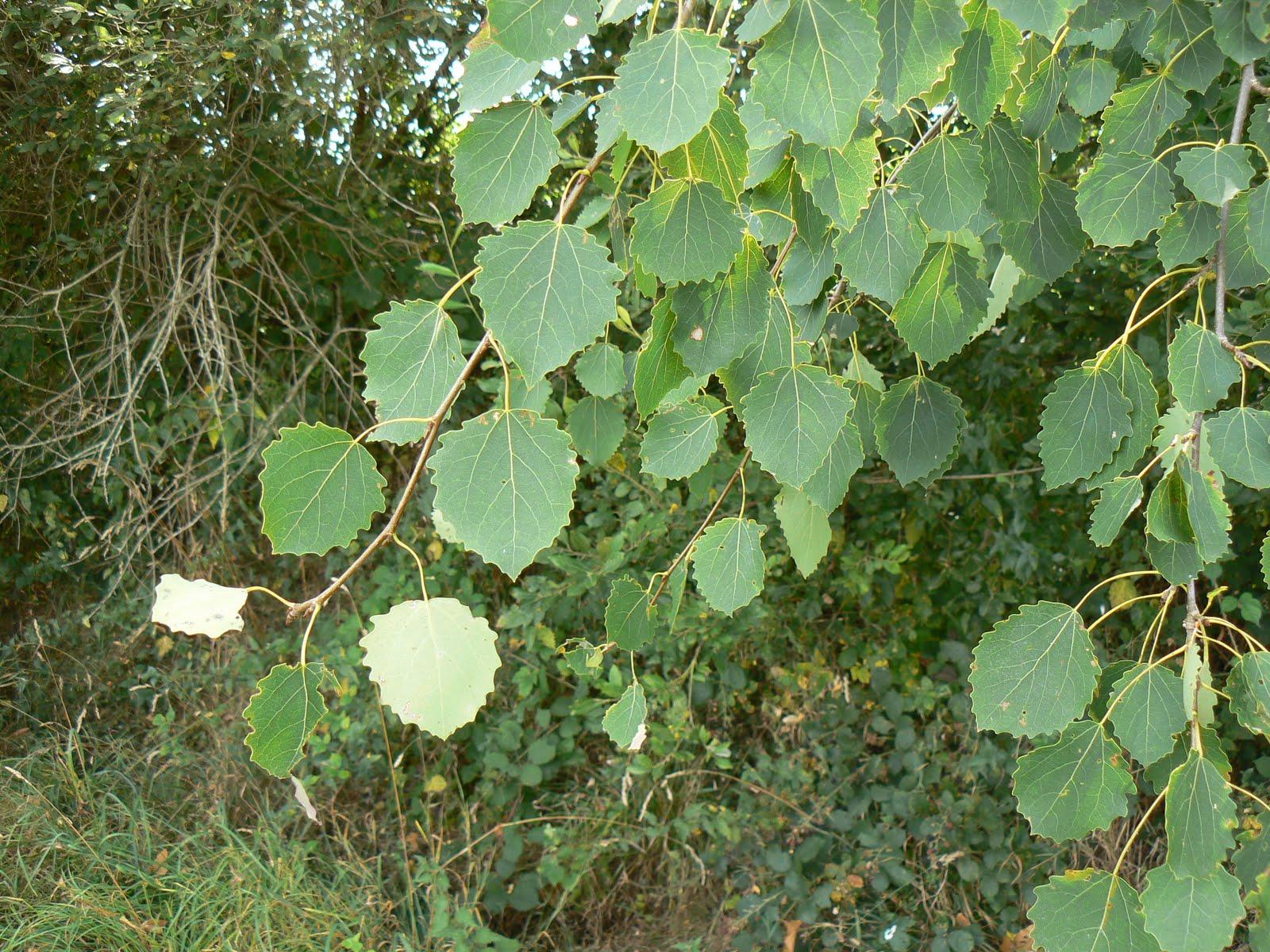 Kalon gwez jardin de l 39 arbre de vie formation elixirs for Au jardin des sans pourquoi