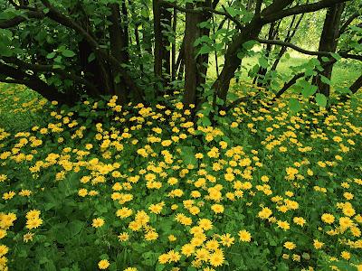 computer wallpaper flowers. Wallpaper Flower Mix Gallery