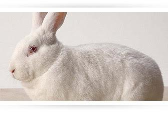 Conejo?   WikiRespuestas   Fandom powered by Wikia