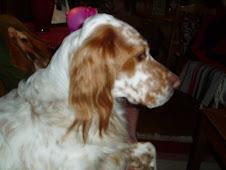 Min hund Tropp