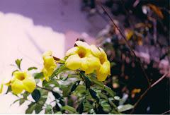 Flores para una mujer