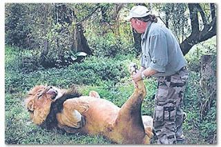 Renjer berani pegang kemaluan singa