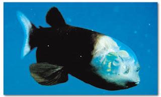 Saintis rungkai misteri ikan ganjil
