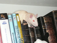 R.I.P. Elf the Rat. 2008 - 2009.