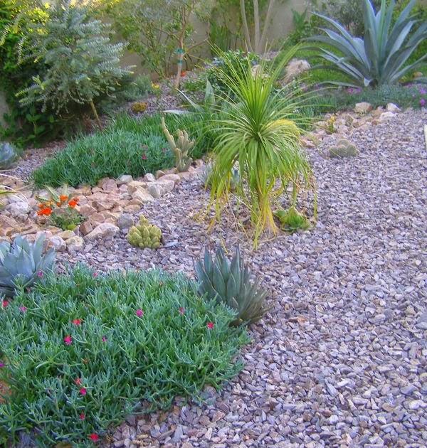 Arizona Landscaping The Wonderful Rocky Pt Malephora