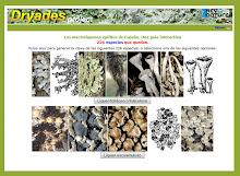 Guía interactiva de los macrolíquenes epifitos de España