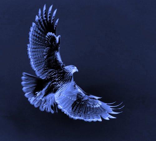 volo di Falco
