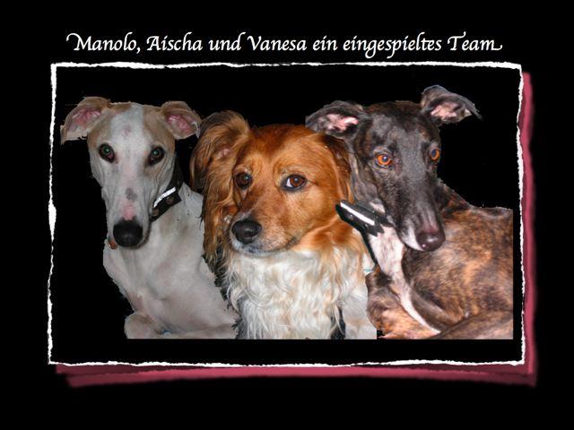 Bild anklicken zur Homepage von Pro Animale