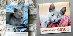 Unitedcats helps you communicate with other cat-owners from around the world