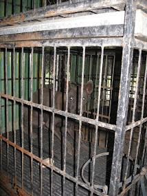 Prisoner 83