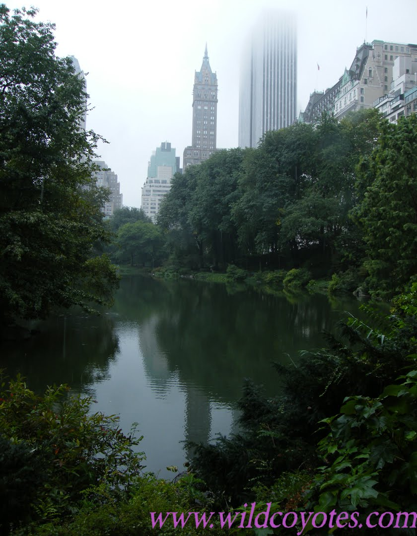 [Central+Park-buildings-mist-small-logo.jpg]