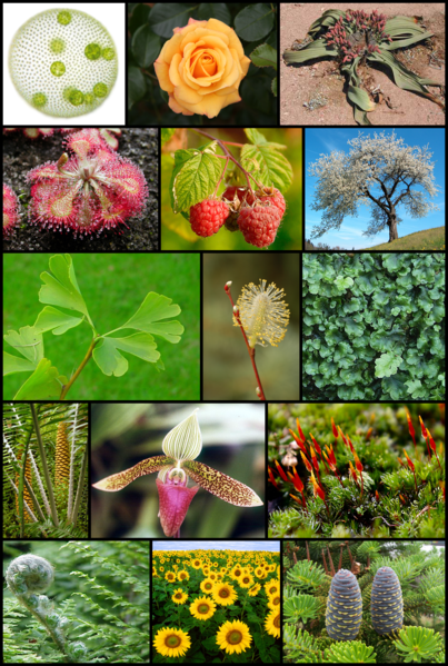 El mundo de las plantas plantas para suelos acidos for Botanica general pdf