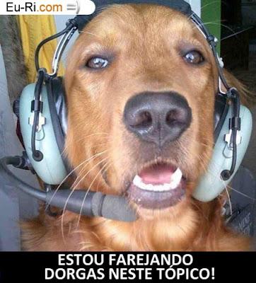 Programa de Incentivo ao Uso da Língua Portuguesa  Farejando-dorgas02-452x500