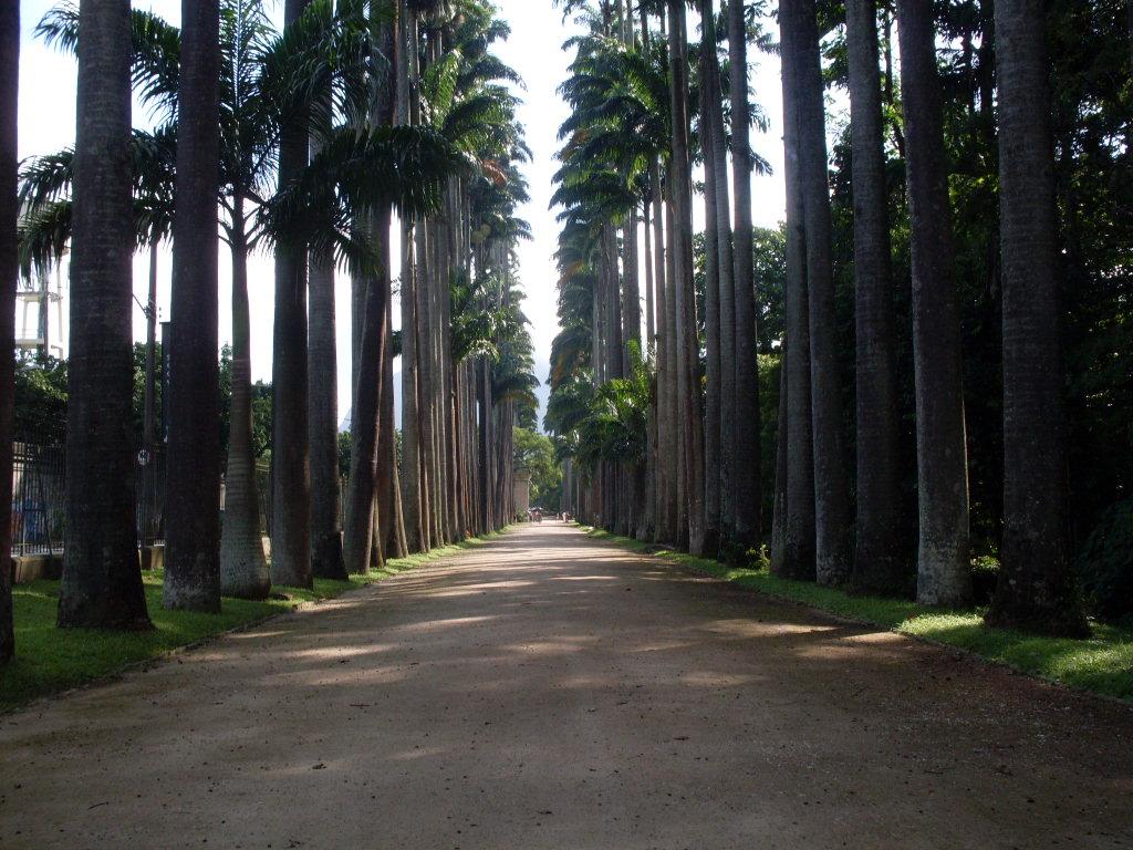 imagens jardim botanico rio de janeiro:Rio de Janeiro – fotos autênticas – o lugar existe: Jardim Botânico