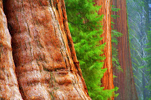 .redwood bark.