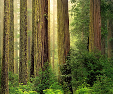 .humboldt redwood.