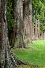 .redwood herd.