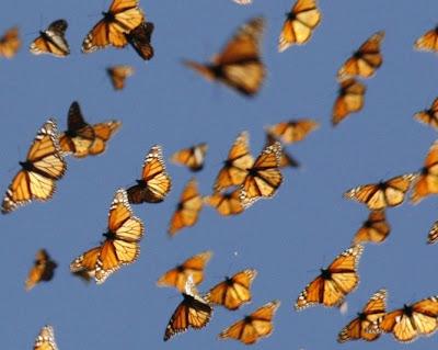 Mariposa Monar. Créditos: Science